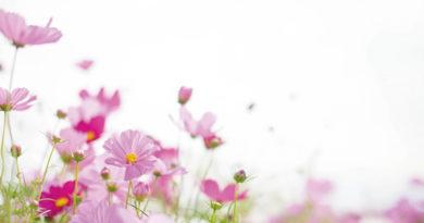 令和あやかり婚 秋桜の季節 心にも花を